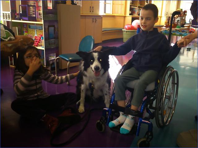 Milán terápiás kutyával Amerikában - Gyermekek belföldön és külföldön történő gyógykezelésének támogatása, májtranszplantáció, gerincműtét, gyermek szívműtétek, különleges műtétek